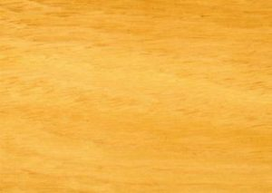 Tasmanian Oak melbourne victoria australia